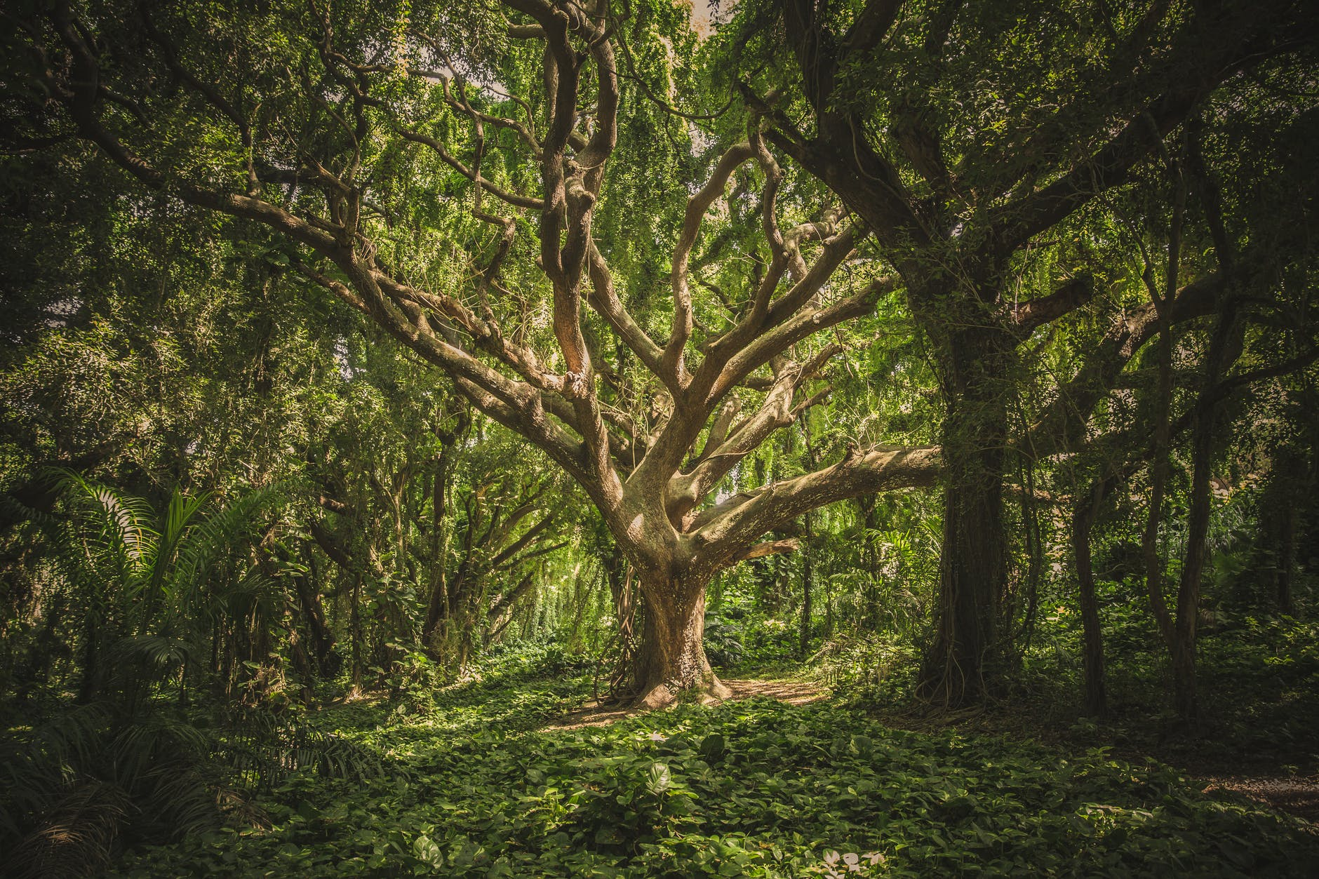 An old tree in a green forest