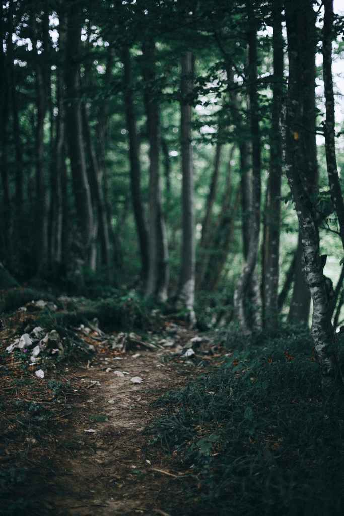 A dirt path in a very green forest.